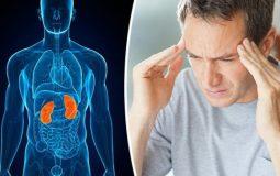 Thận còn ảnh hưởng trực tiếp đến sự lưu thông máu trong cơ thể