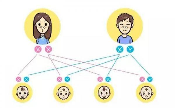 Việc sinh con trai hay con gái phụ thuộc vào nhiễm sắc thể của tinh trùng