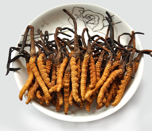 Đông trùng hạ thảo được xem như một vị thuốc đặc biệt quý hiếm có vị ngọt, tính ấm, là sự kết hợp của sâu non và nấm Cordyceps